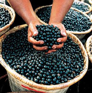 Miracle of Juice Fasting, Acai Berries.